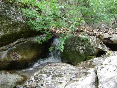 34- Сквозь листву среди камней весело бежит ручей...