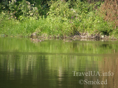 Южный Буг, река, пейзаж, природа