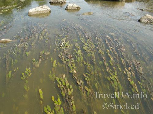 Южный Буг, река, пейзаж, природа, водоросли