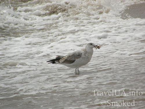 Одесская область, море, птицы