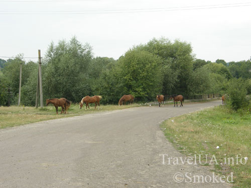 Куткир, кони