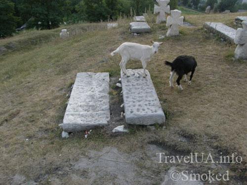 kozy-na-plitah