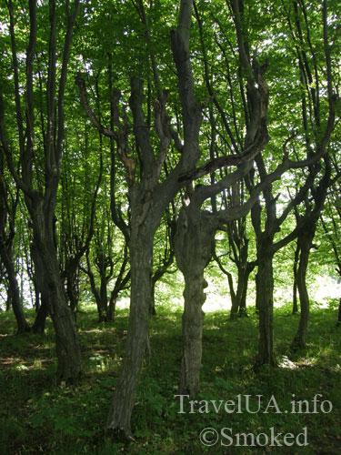 парк, Подгорцы, дворец Конецпольских