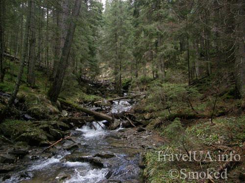 Говерла, Карпаты, горы, лес, Прут