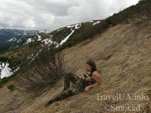 Говерла, Карпаты, горы, горные цветы