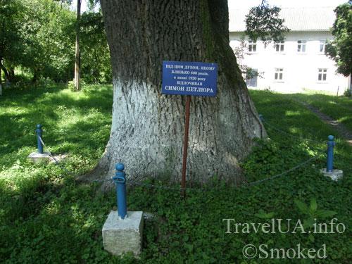 Мариамполь, дуб, Петлюра