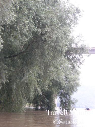 dereva-v-vode1